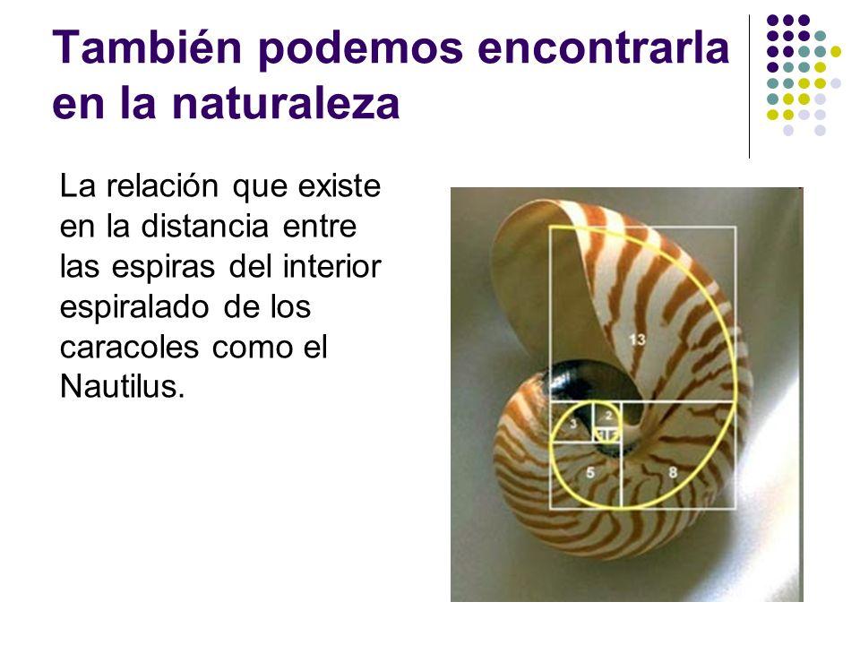 También podemos encontrarla en la naturaleza