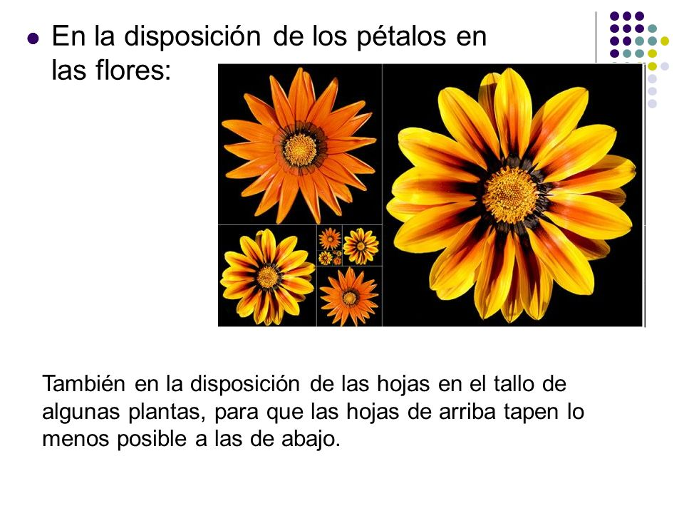En la disposición de los pétalos en las flores: