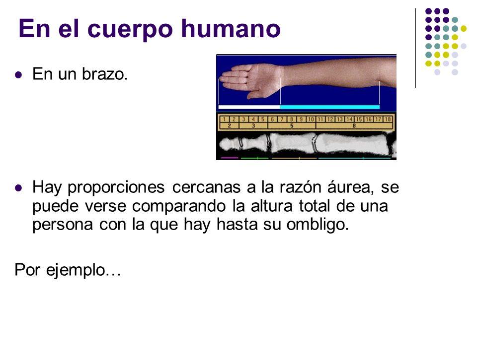 En el cuerpo humano En un brazo.