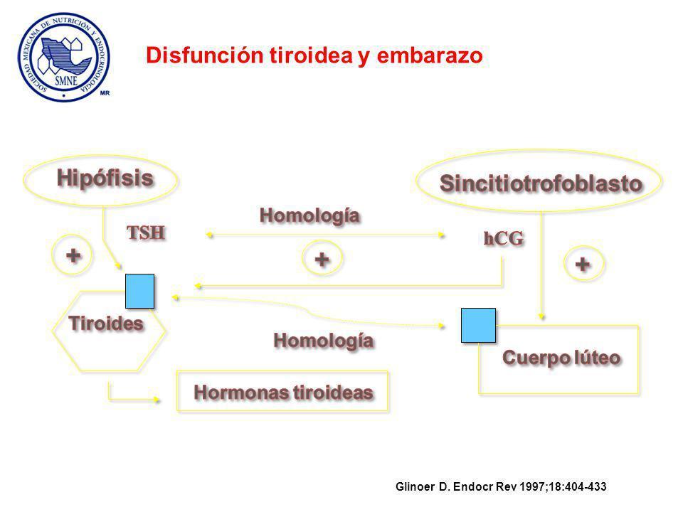 + Disfunción tiroidea y embarazo Hipófisis Sincitiotrofoblasto