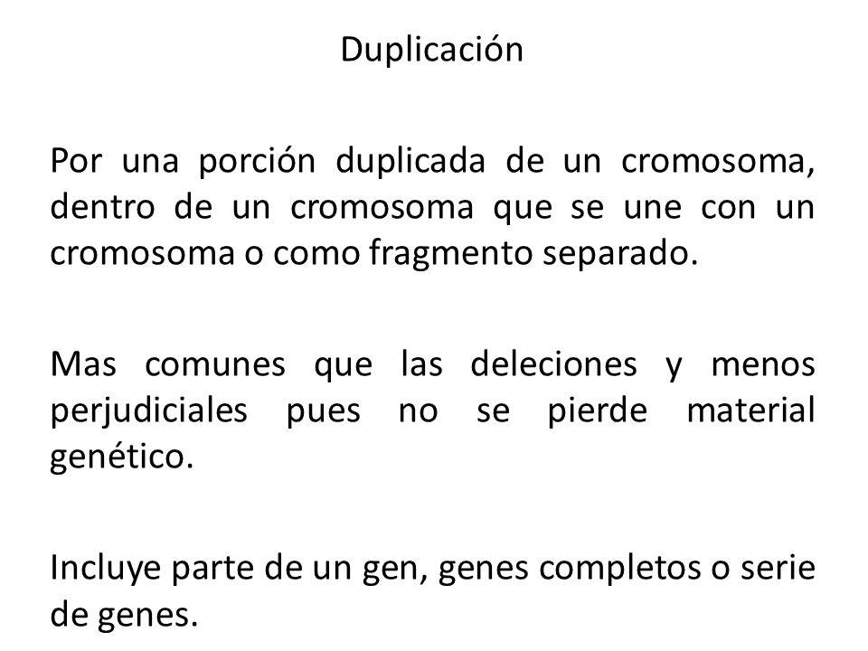 DuplicaciónPor una porción duplicada de un cromosoma, dentro de un cromosoma que se une con un cromosoma o como fragmento separado.