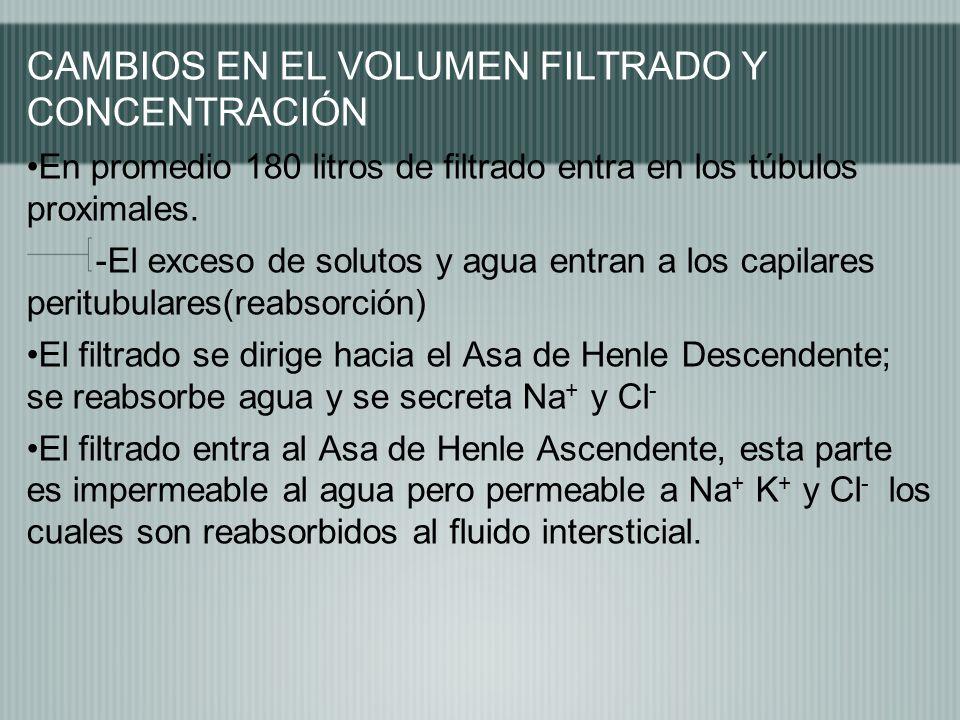 CAMBIOS EN EL VOLUMEN FILTRADO Y CONCENTRACIÓN