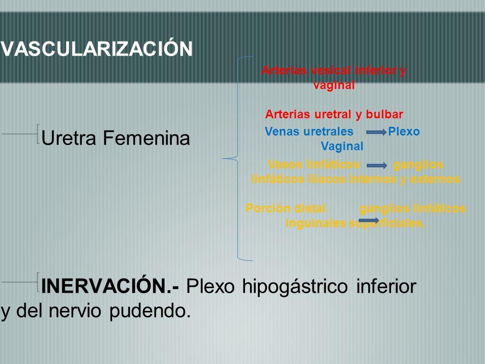 INERVACIÓN.- Plexo hipogástrico inferior y del nervio pudendo.