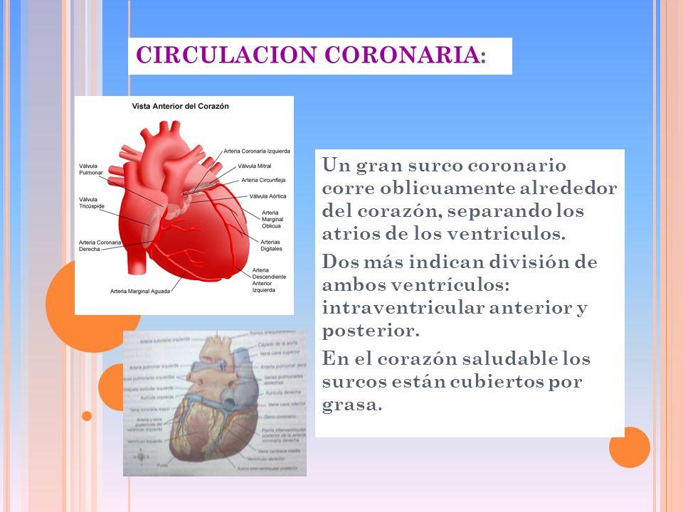 CIRCULACION CORONARIA: