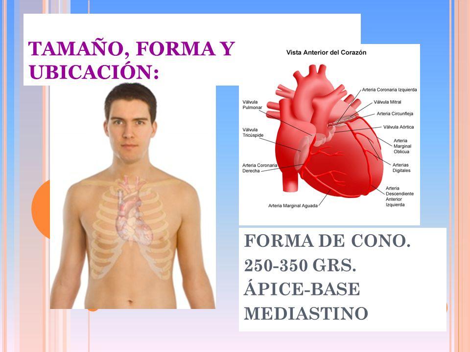 TAMAÑO, FORMA Y UBICACIÓN: