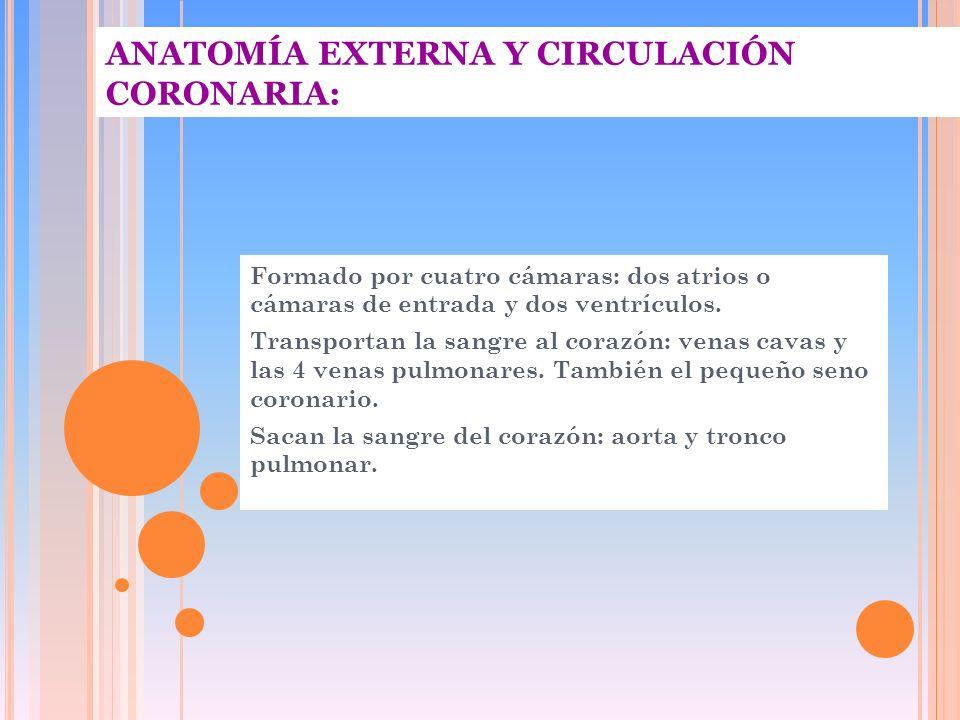 ANATOMÍA EXTERNA Y CIRCULACIÓN CORONARIA: