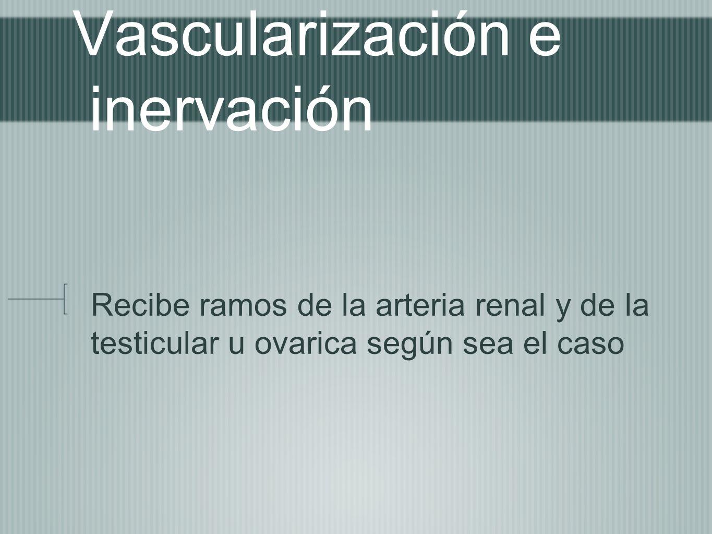 Vascularización e inervación