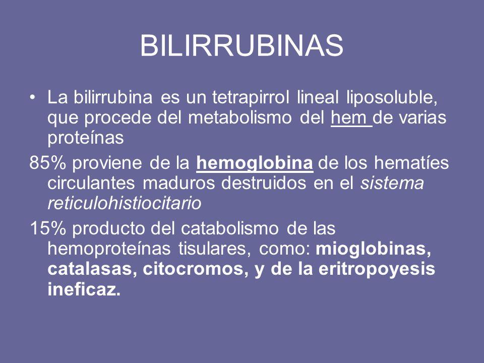 BILIRRUBINAS La bilirrubina es un tetrapirrol lineal liposoluble, que procede del metabolismo del hem de varias proteínas.