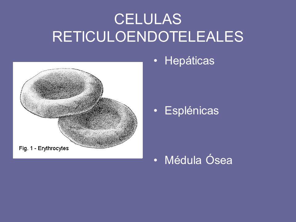 CELULAS RETICULOENDOTELEALES