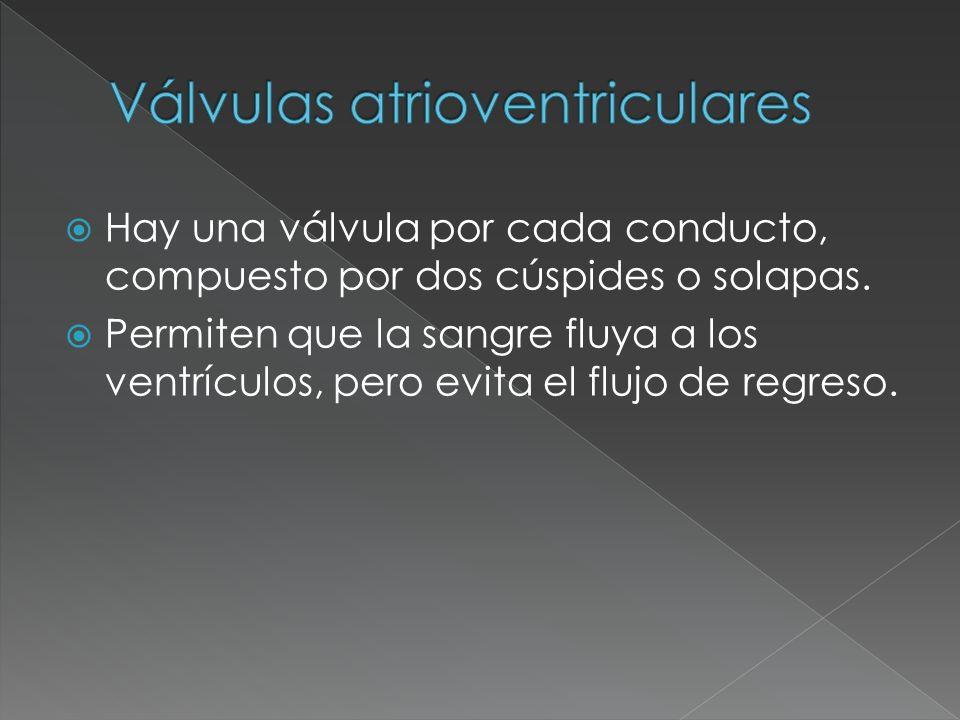 Válvulas atrioventriculares