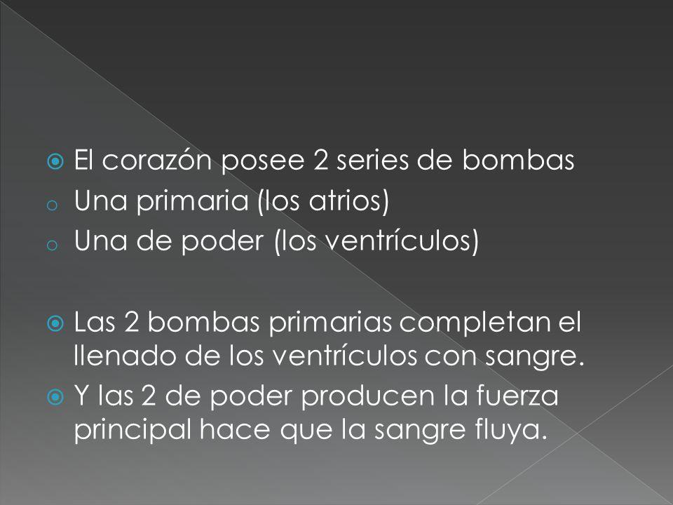 El corazón posee 2 series de bombas