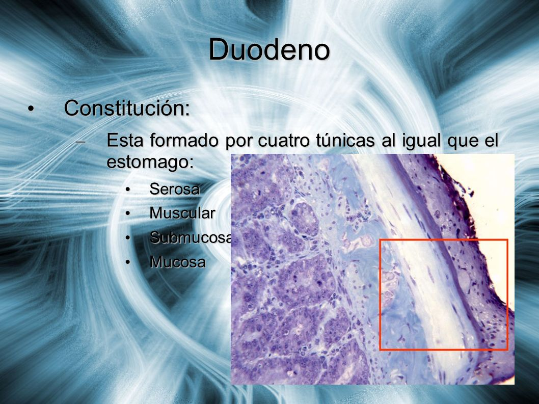 Duodeno Constitución: