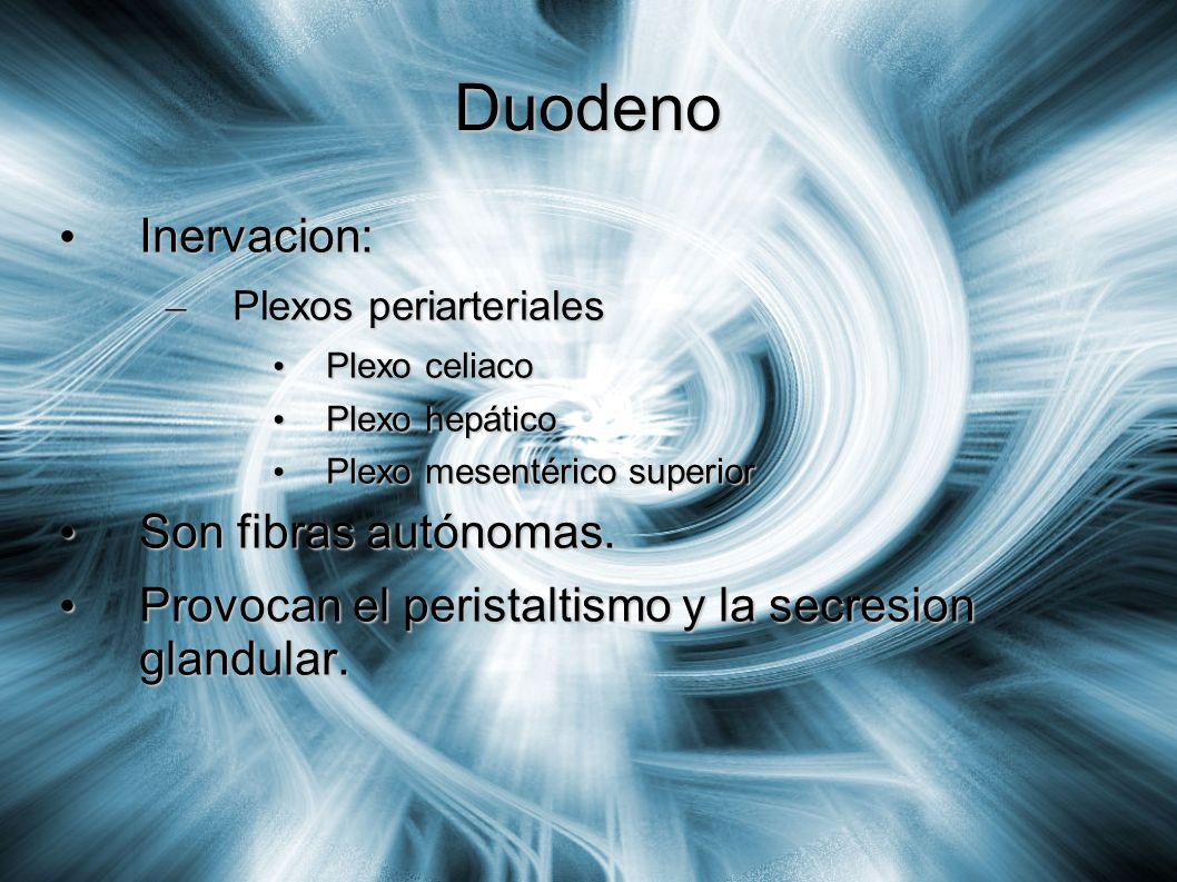 Duodeno Inervacion: Son fibras autónomas.