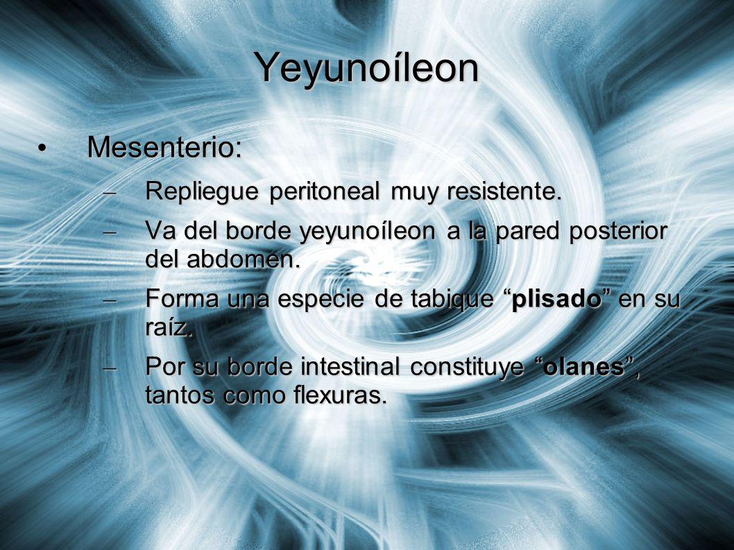 Yeyunoíleon Mesenterio: Repliegue peritoneal muy resistente.