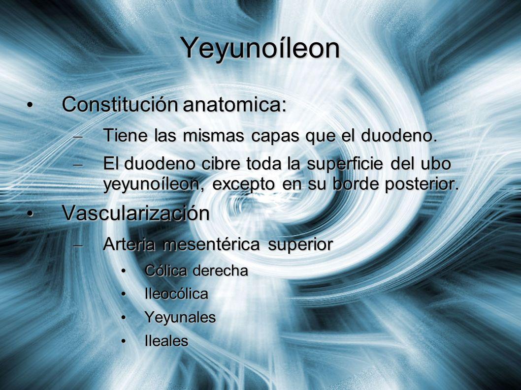 Yeyunoíleon Constitución anatomica: Vascularización