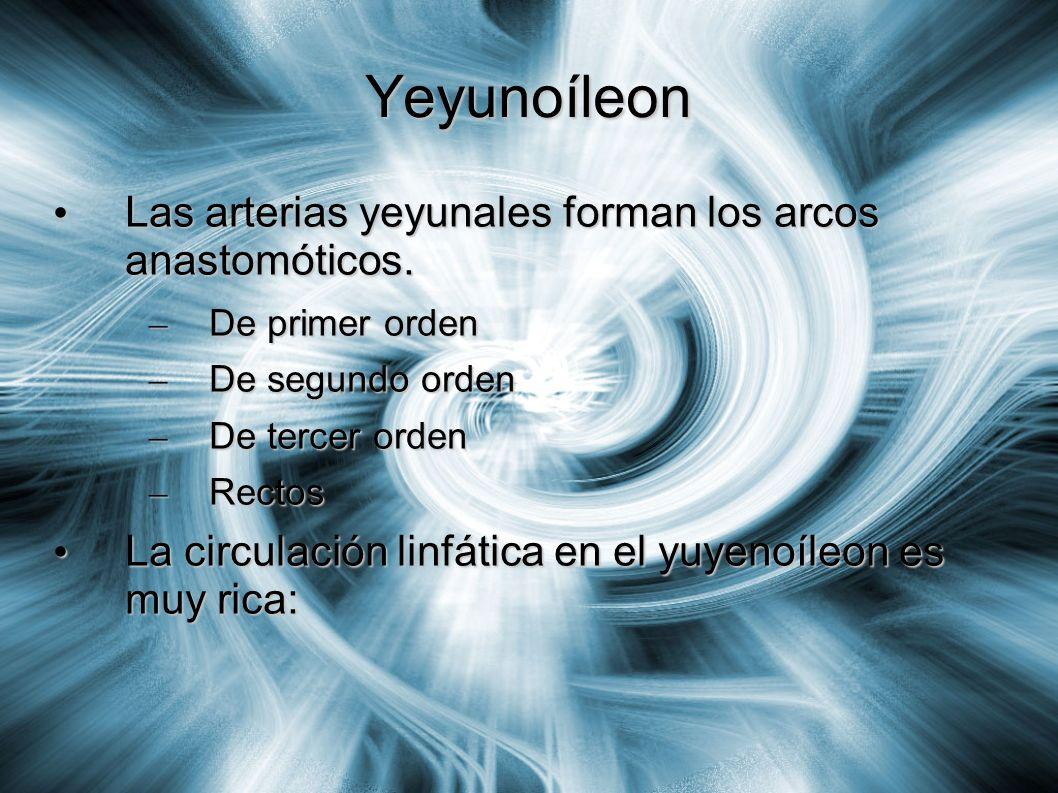 Yeyunoíleon Las arterias yeyunales forman los arcos anastomóticos.