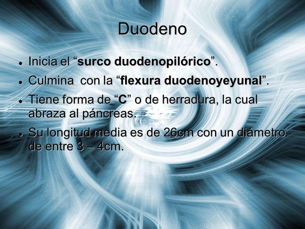 Duodeno Inicia el surco duodenopilórico .