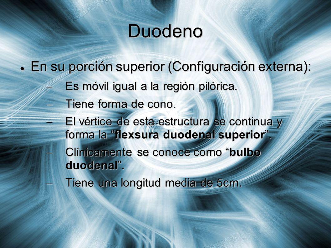 Duodeno En su porción superior (Configuración externa):