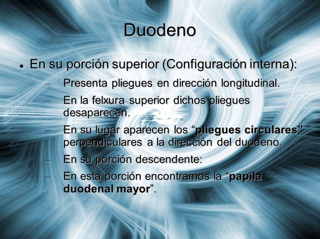 Duodeno En su porción superior (Configuración interna):