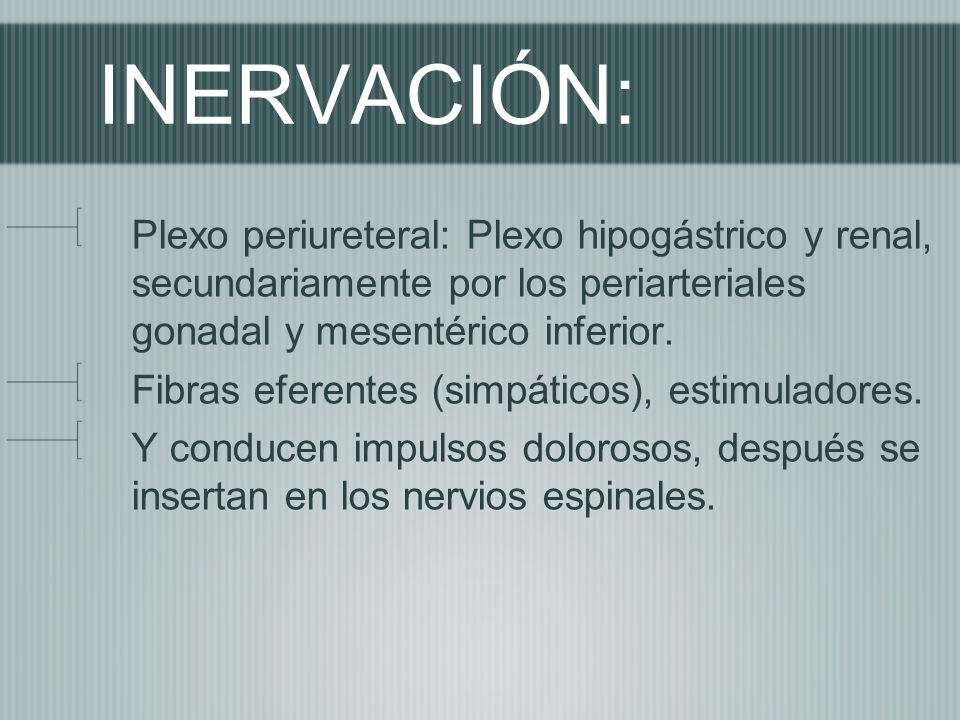 INERVACIÓN: Plexo periureteral: Plexo hipogástrico y renal, secundariamente por los periarteriales gonadal y mesentérico inferior.