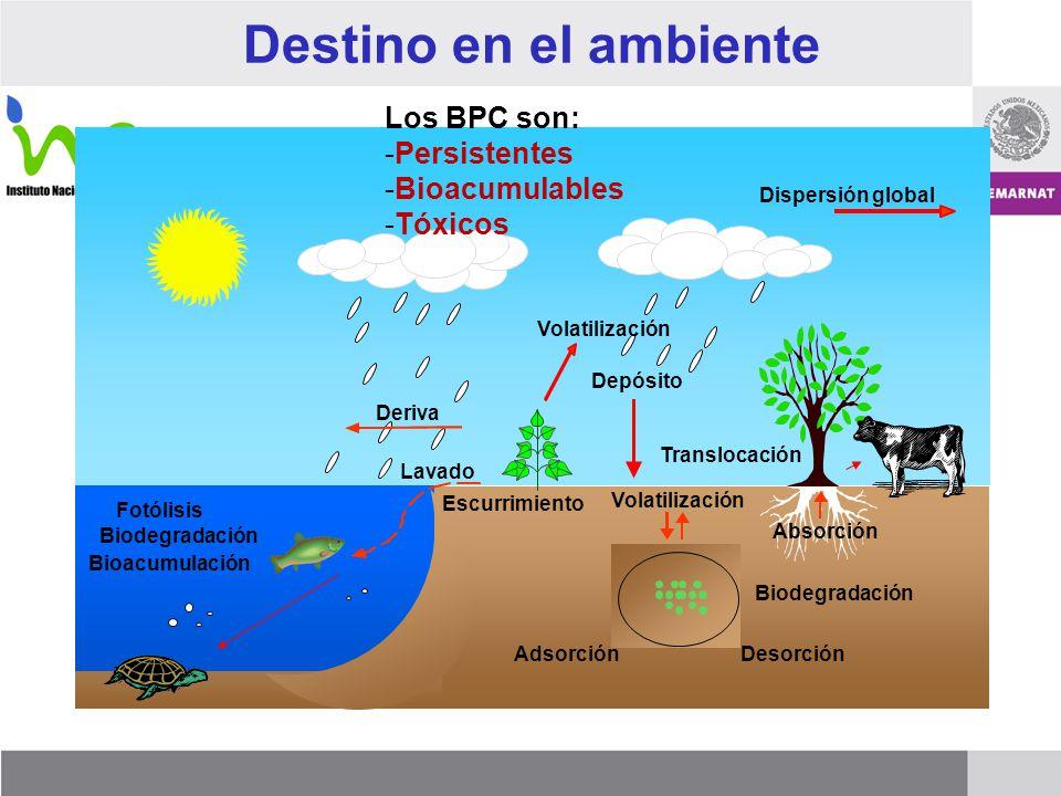 Destino en el ambiente Los BPC son: Persistentes Bioacumulables