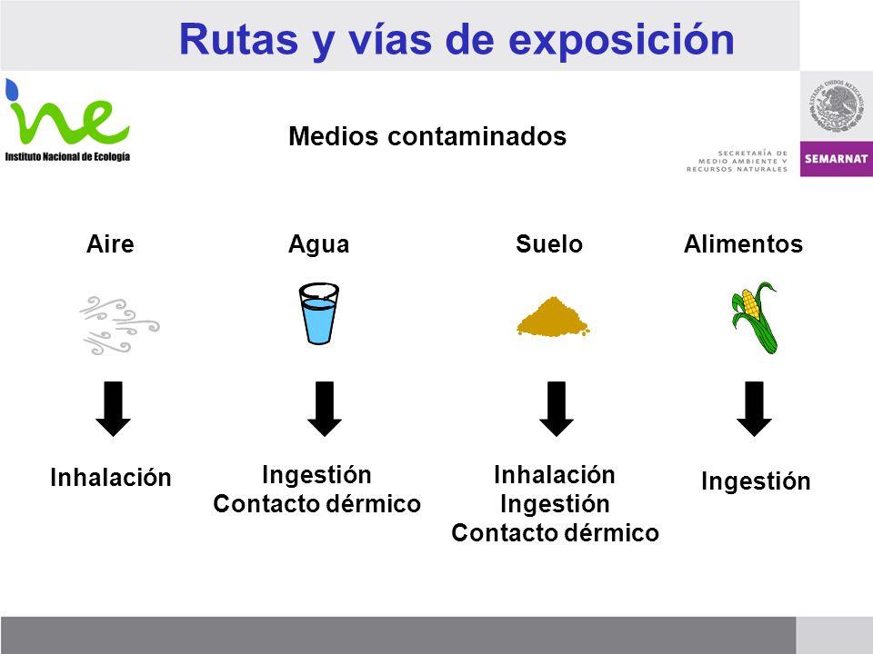 Rutas y vías de exposición