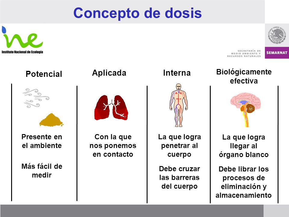 Concepto de dosis Potencial Aplicada Interna Biológicamente efectiva