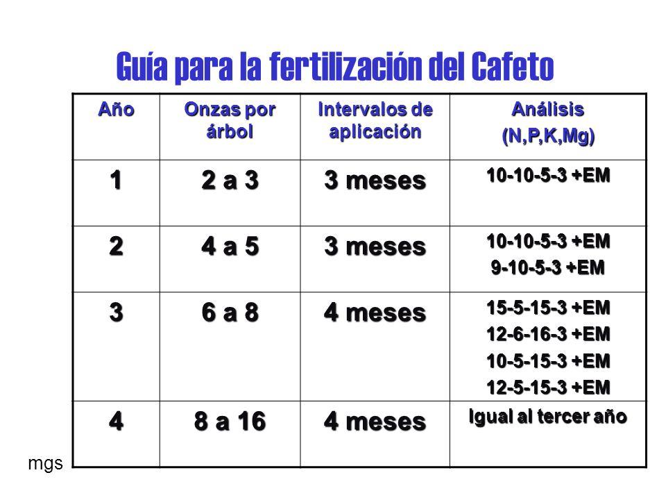Guía para la fertilización del Cafeto