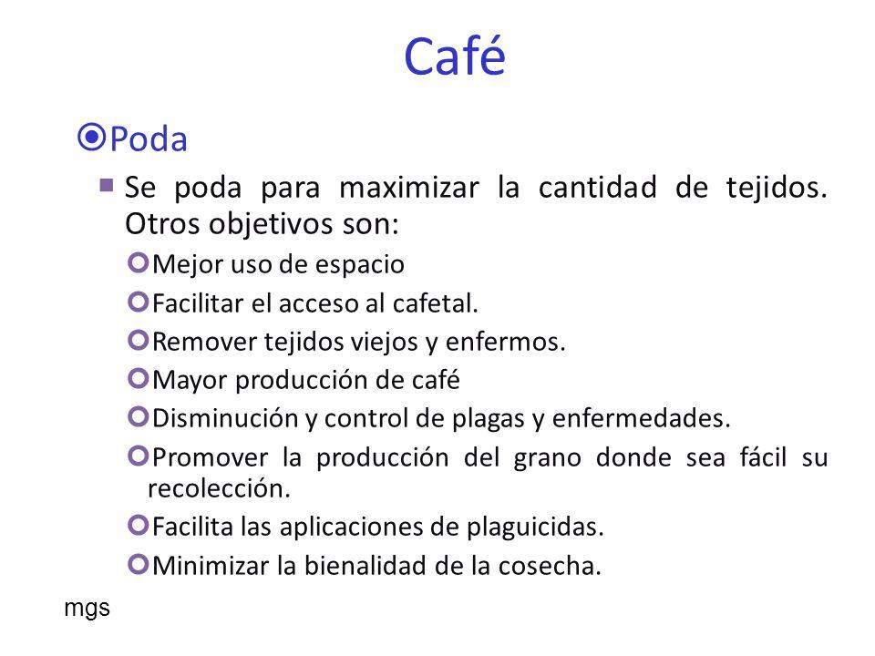 Café Poda. Se poda para maximizar la cantidad de tejidos. Otros objetivos son: Mejor uso de espacio.