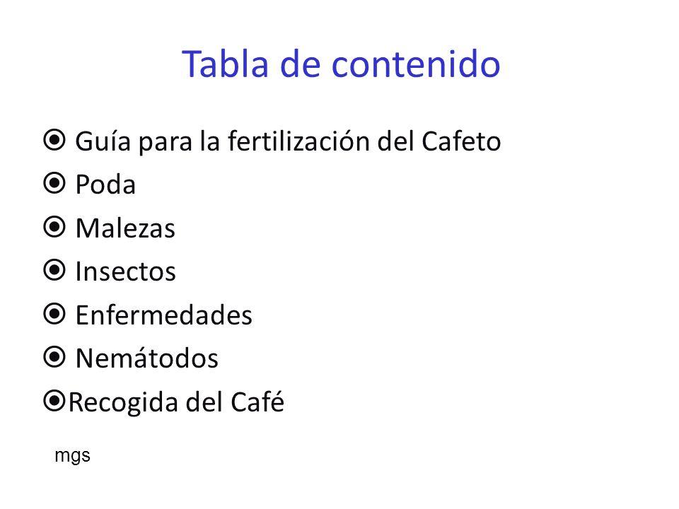 Tabla de contenido Guía para la fertilización del Cafeto Poda Malezas