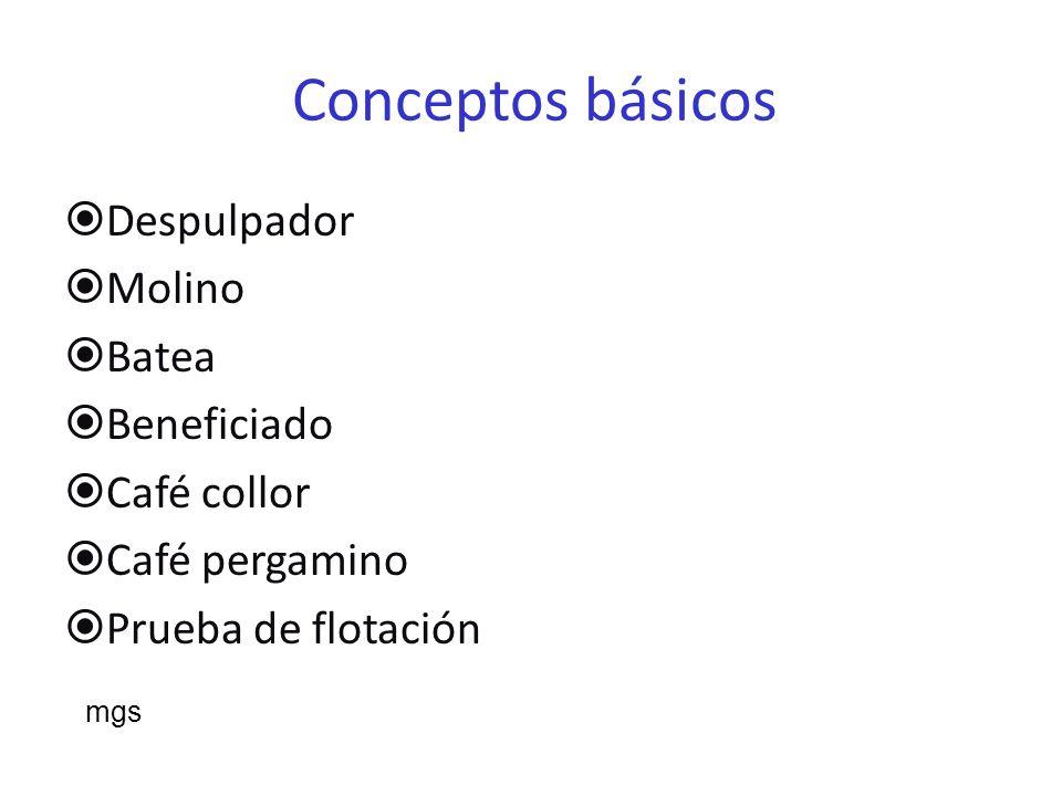 Conceptos básicos Despulpador Molino Batea Beneficiado Café collor