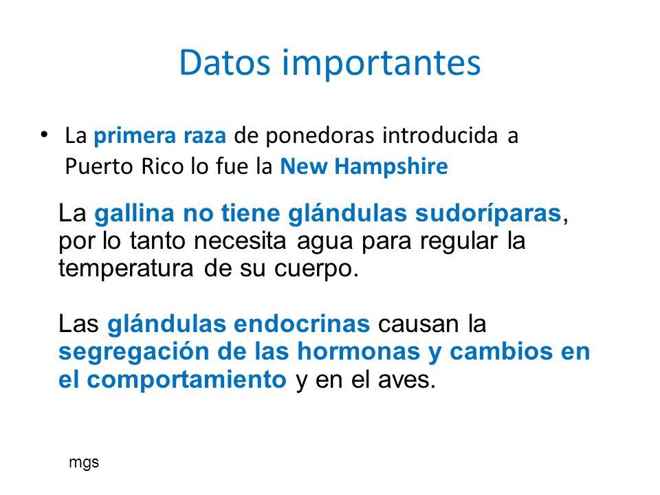 Datos importantes La primera raza de ponedoras introducida a Puerto Rico lo fue la New Hampshire.