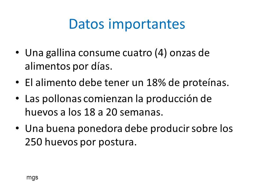 Datos importantes Una gallina consume cuatro (4) onzas de alimentos por días. El alimento debe tener un 18% de proteínas.