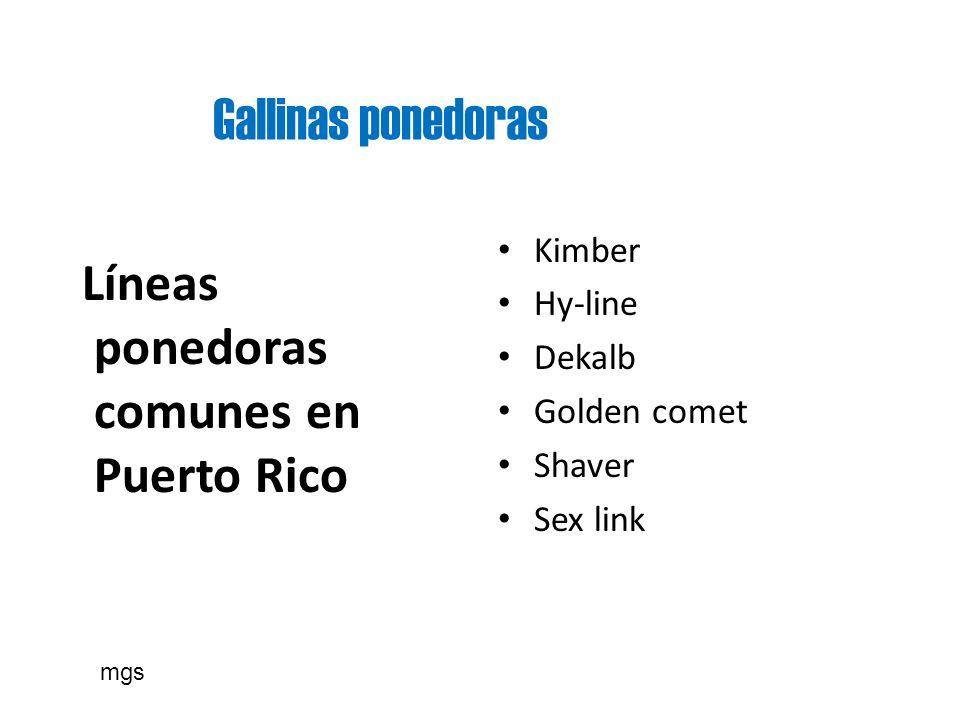 Gallinas ponedoras Líneas ponedoras comunes en Puerto Rico Kimber