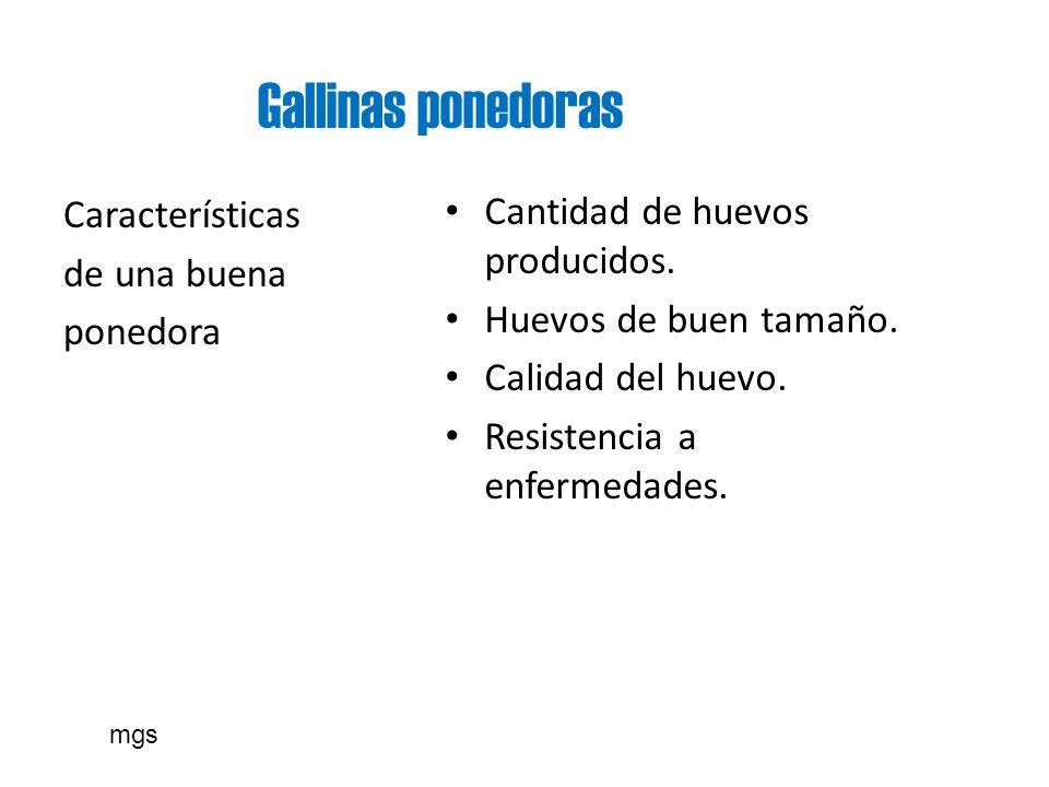 Gallinas ponedoras Cantidad de huevos producidos.