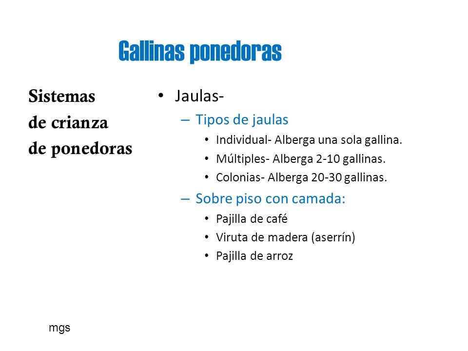 Gallinas ponedoras Sistemas de crianza de ponedoras Jaulas-