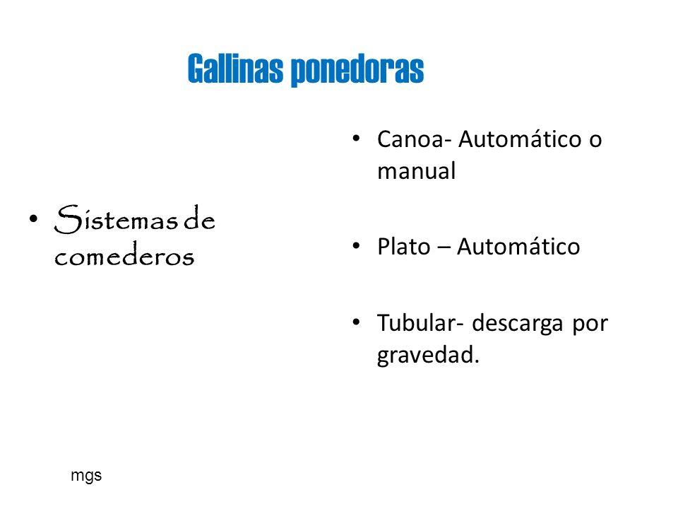 Gallinas ponedoras Sistemas de comederos Canoa- Automático o manual
