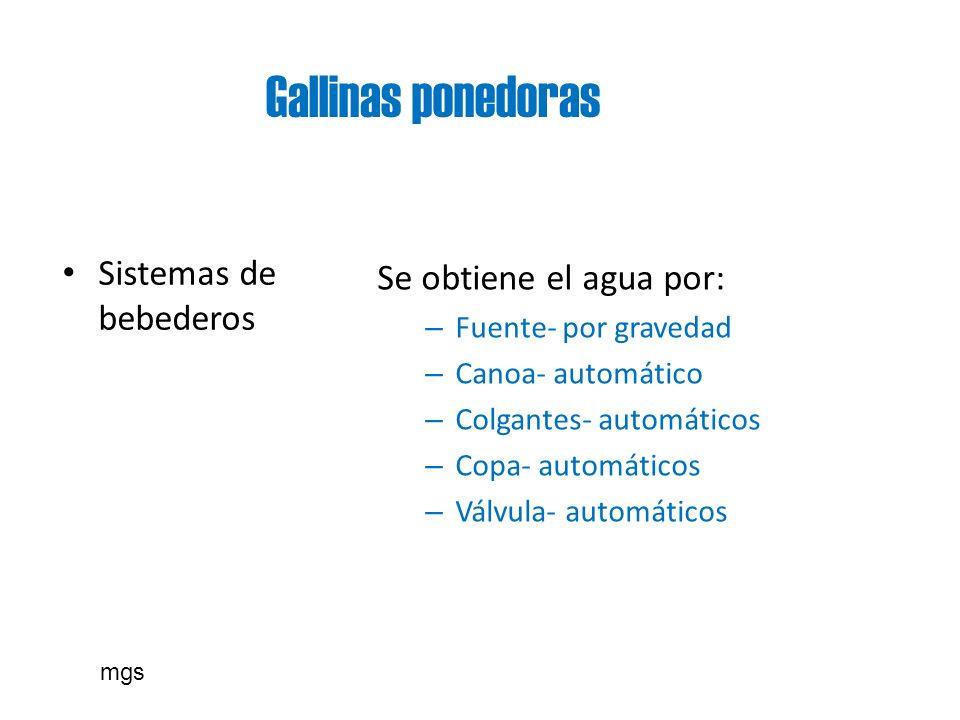 Gallinas ponedoras Se obtiene el agua por: Sistemas de bebederos