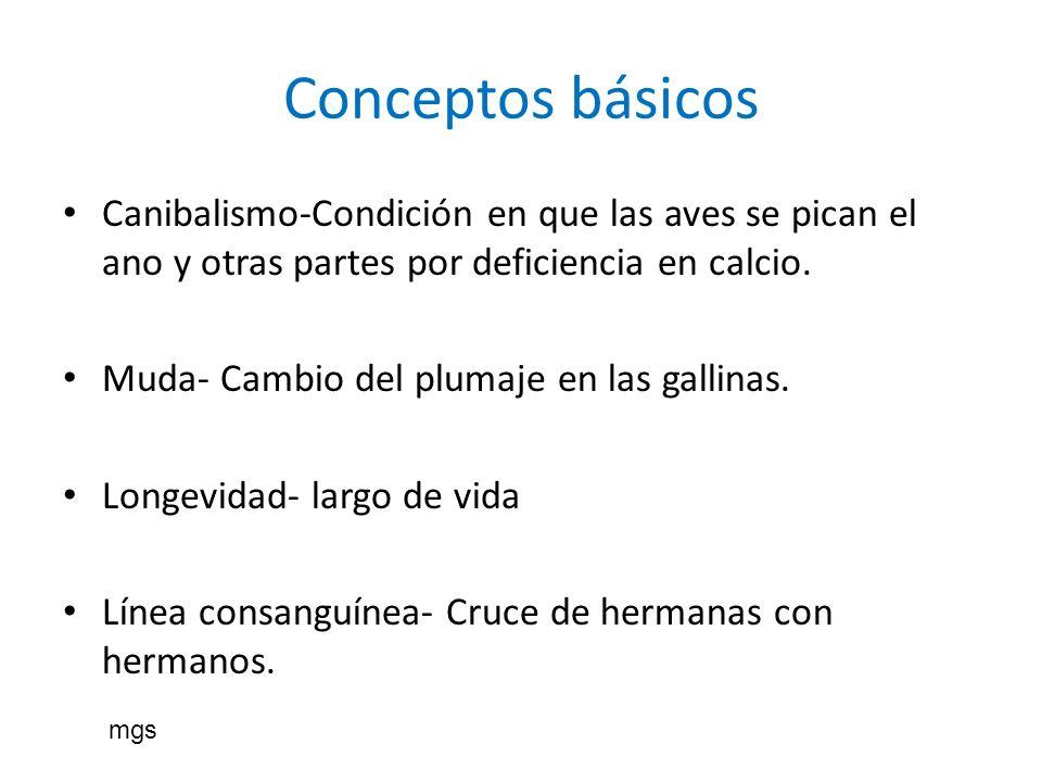 Conceptos básicos Canibalismo-Condición en que las aves se pican el ano y otras partes por deficiencia en calcio.