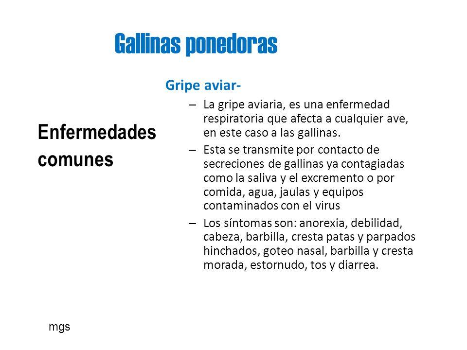 Gallinas ponedoras Enfermedades comunes Gripe aviar-