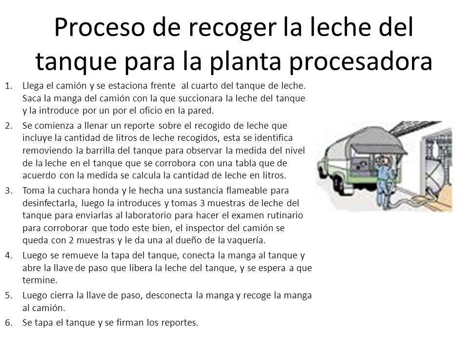 Proceso de recoger la leche del tanque para la planta procesadora