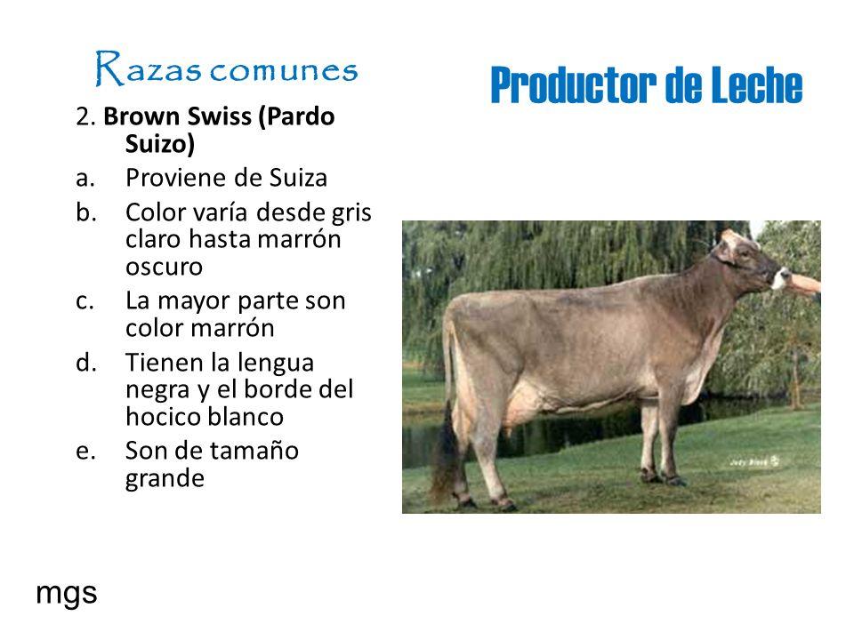 Productor de Leche Razas comunes mgs 2. Brown Swiss (Pardo Suizo)