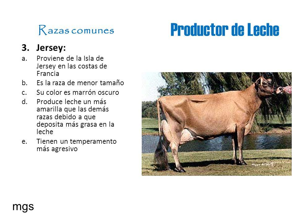 Productor de Leche Razas comunes mgs Jersey: