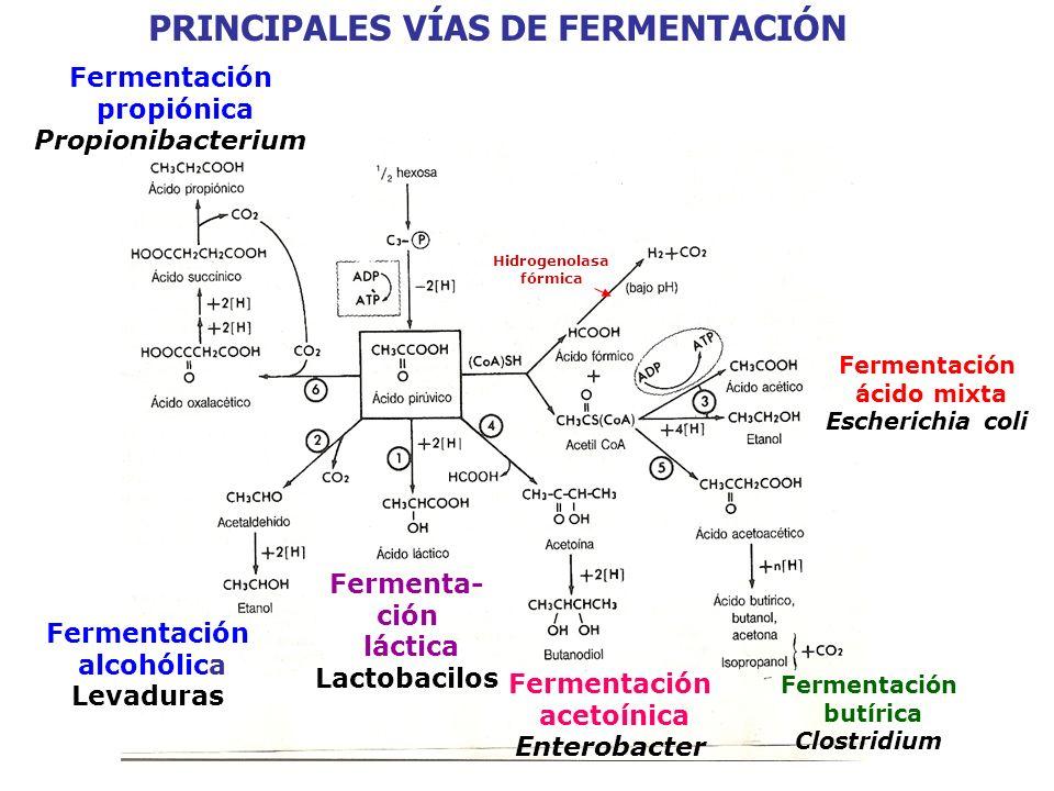 PRINCIPALES VÍAS DE FERMENTACIÓN