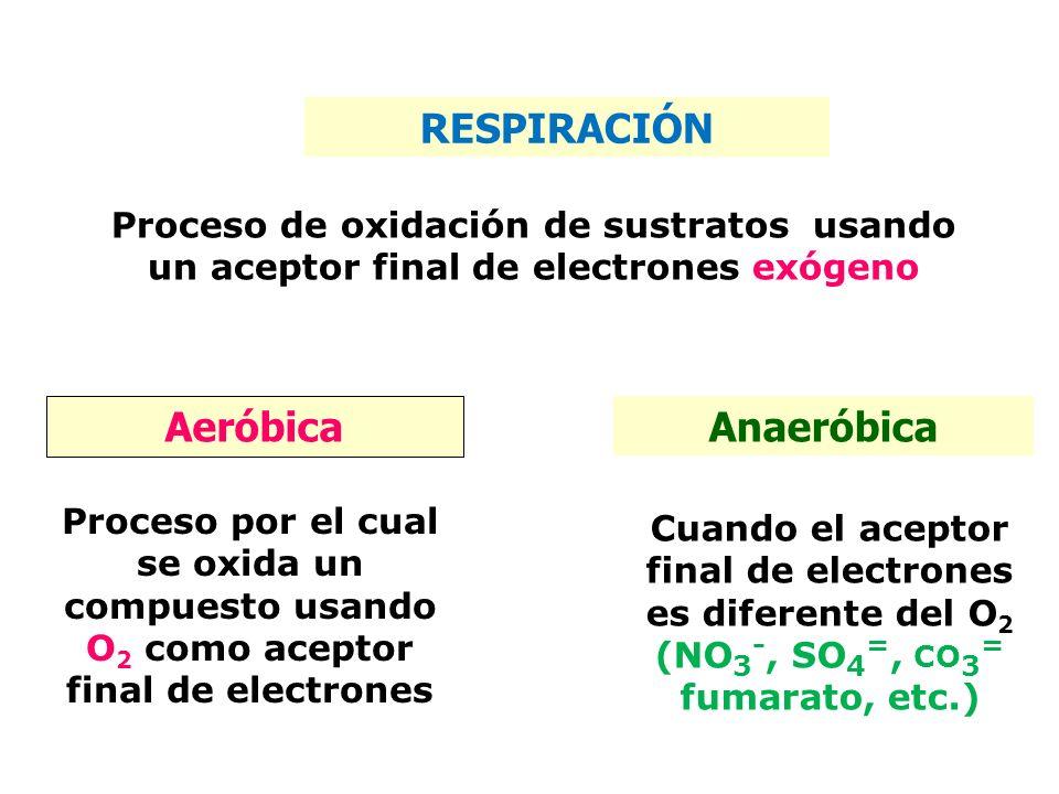 RESPIRACIÓN Aeróbica Anaeróbica