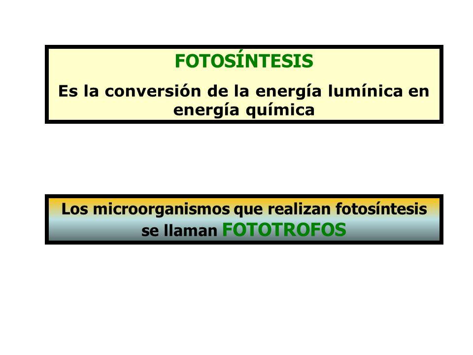 FOTOSÍNTESIS Es la conversión de la energía lumínica en energía química.