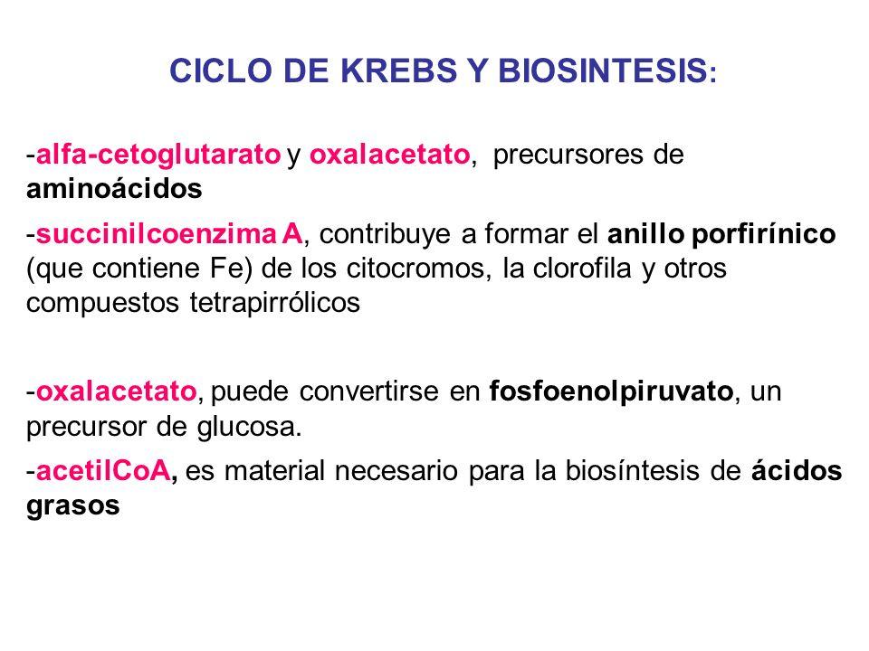 CICLO DE KREBS Y BIOSINTESIS: