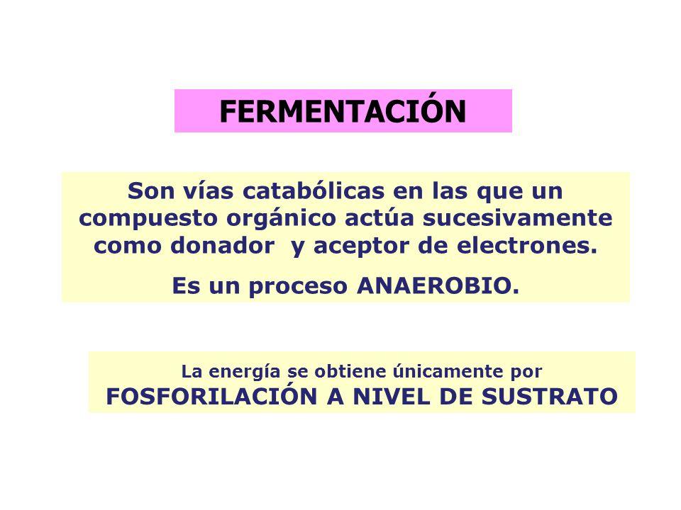 FERMENTACIÓNSon vías catabólicas en las que un compuesto orgánico actúa sucesivamente como donador y aceptor de electrones.
