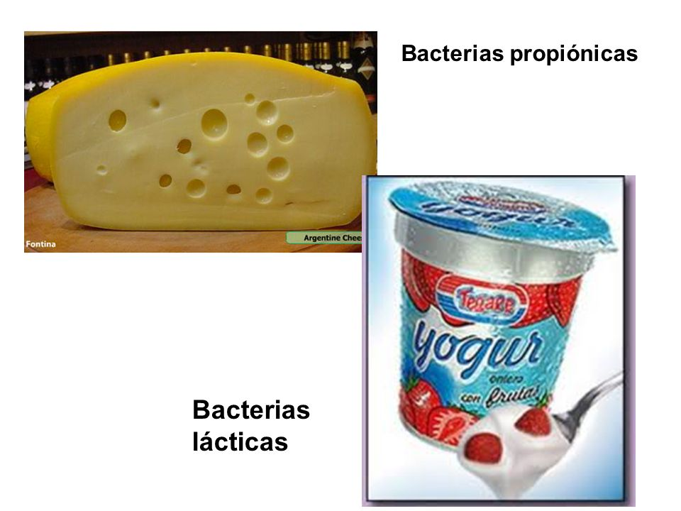 Bacterias propiónicas