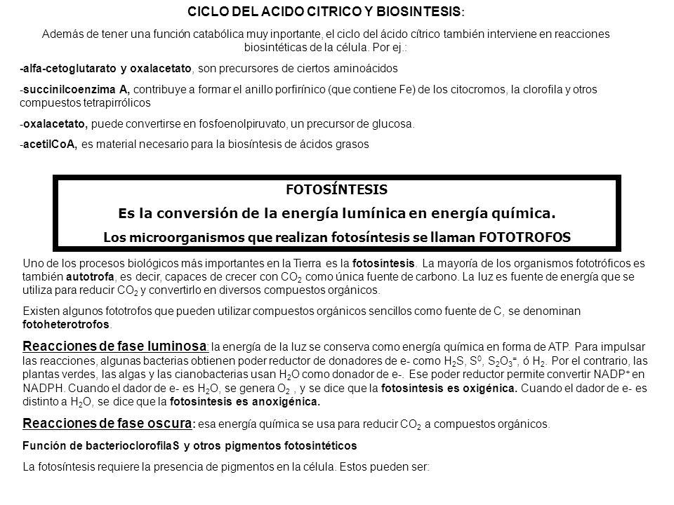 CICLO DEL ACIDO CITRICO Y BIOSINTESIS: